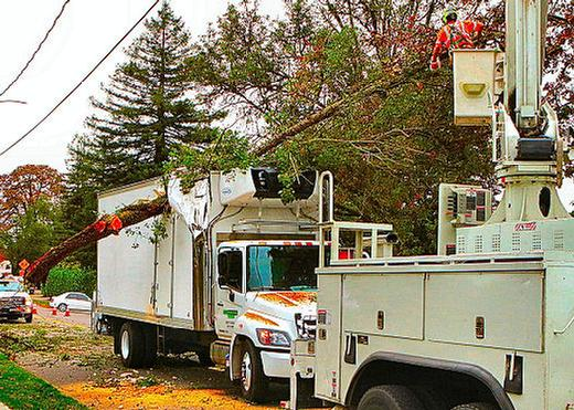 S.E. 13th Avenue was closed on the Bybee Curve in Westmoreland, while workers toiled to extract the huge, torn-off overhanging tree limb from inside the front top corner of a local delivery truck.